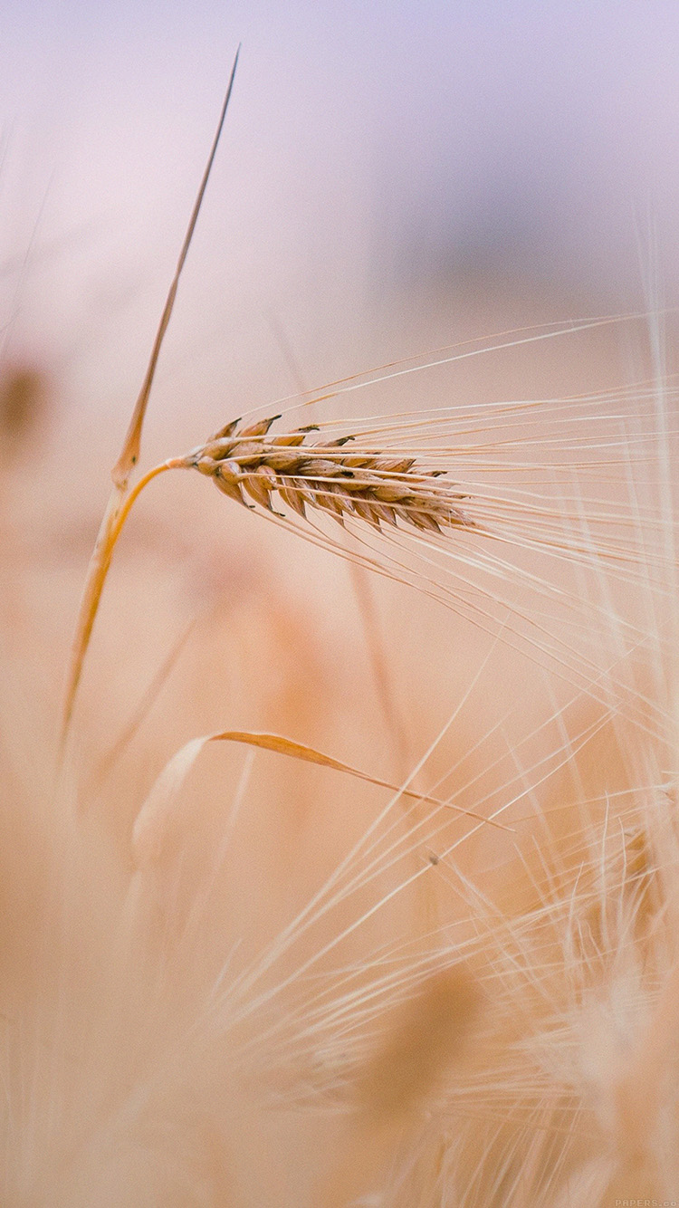 iPhone6papers.co-Apple-iPhone-6-iphone6-plus-wallpaper-mk63-rice-leaf-nature-bokeh-blur