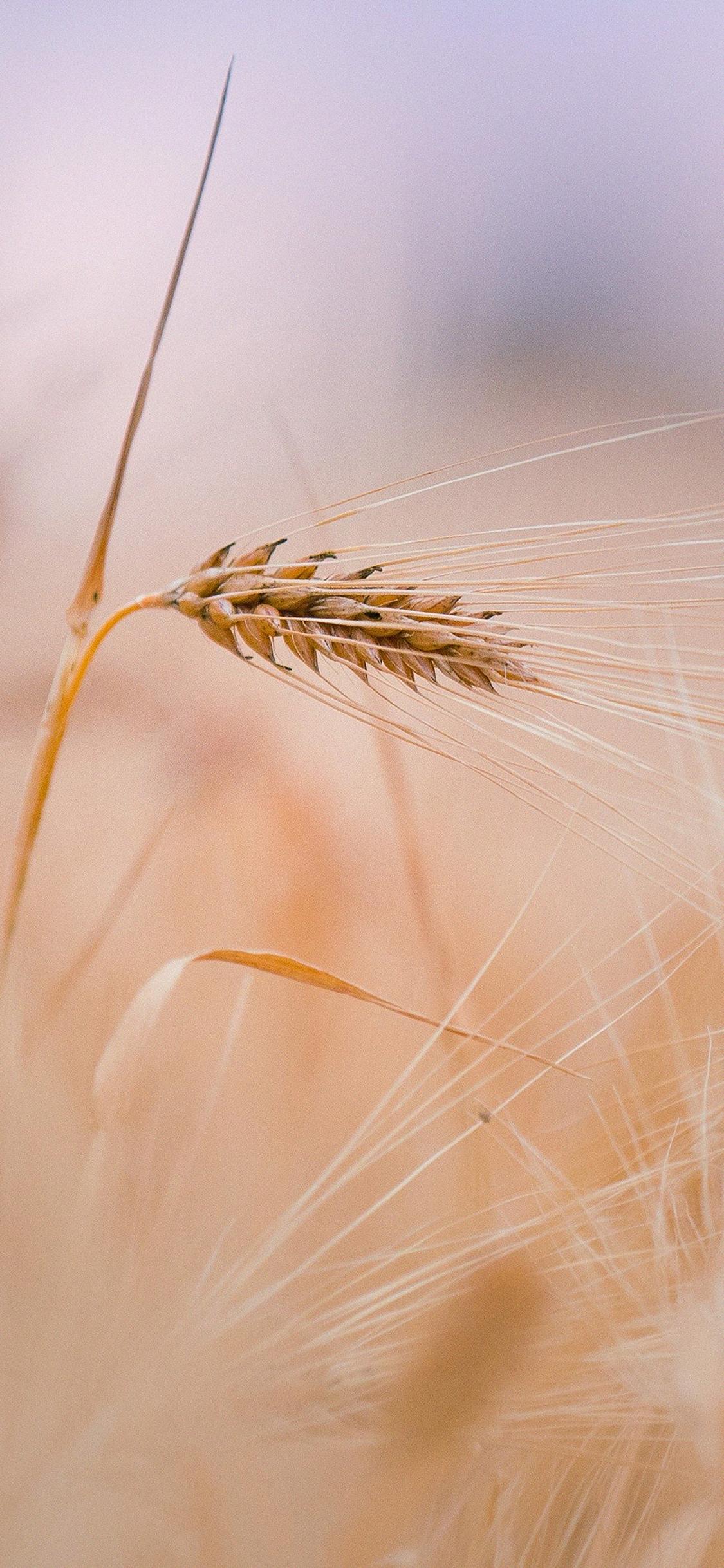 iPhoneXpapers.com-Apple-iPhone-wallpaper-mk63-rice-leaf-nature-bokeh-blur
