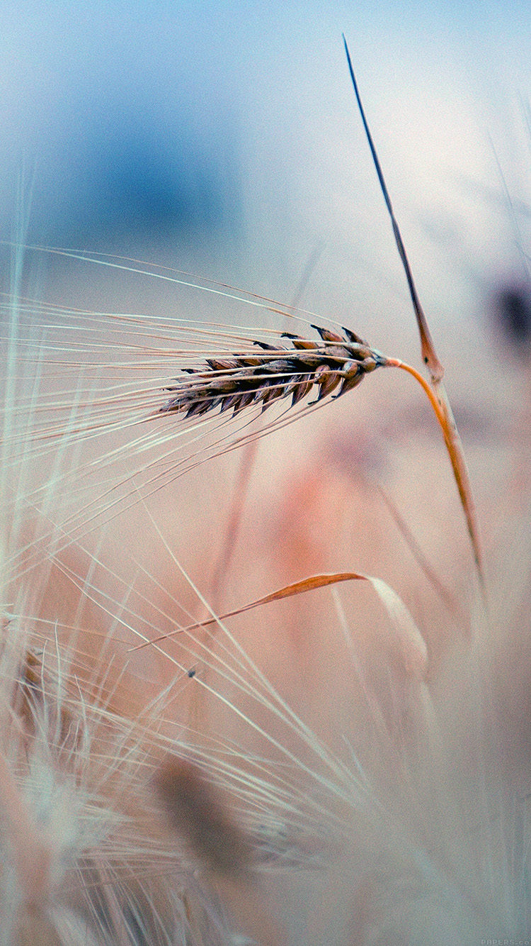 iPhone6papers.co-Apple-iPhone-6-iphone6-plus-wallpaper-mk64-rice-leaf-nature-blue-bokeh-blur