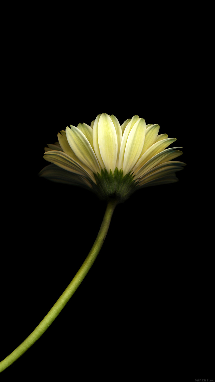 iPhone6papers.co-Apple-iPhone-6-iphone6-plus-wallpaper-mk67-lonely-flower-dark-simple-minimal-nature