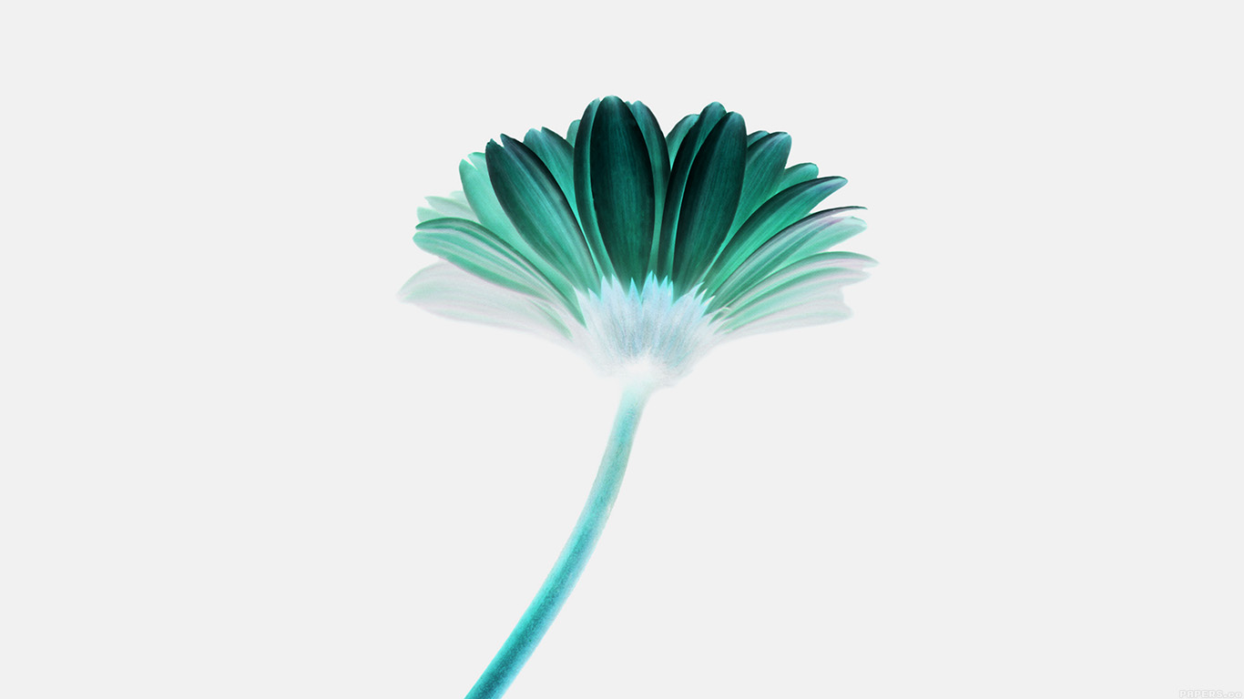 desktop-wallpaper-laptop-mac-macbook-airmk68-lonely-flower-white-green-simple-minimal-nature-wallpaper