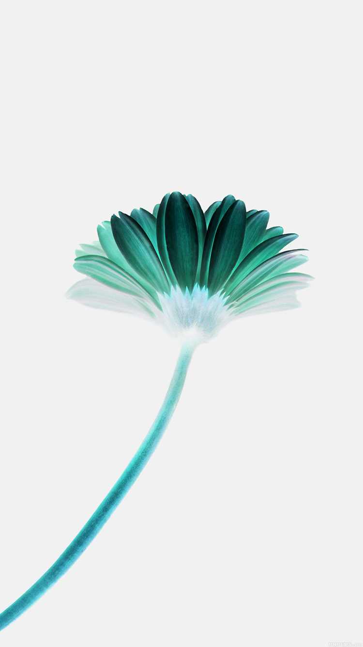 iPhone6papers.co-Apple-iPhone-6-iphone6-plus-wallpaper-mk68-lonely-flower-white-green-simple-minimal-nature
