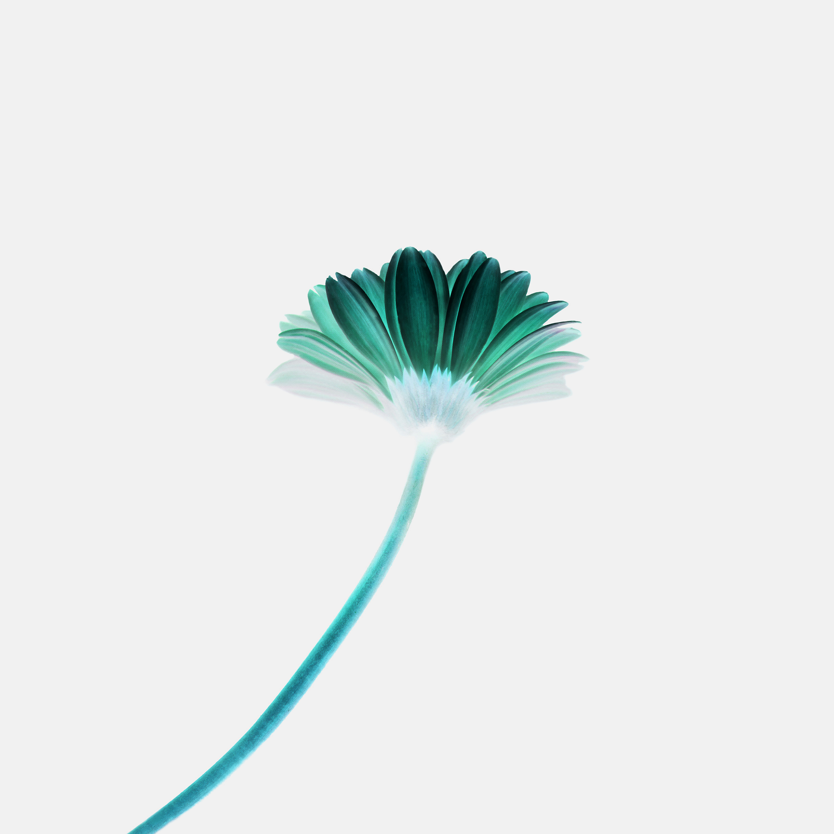 Mk68 Lonely Flower White Green Simple Minimal Nature Papers Co