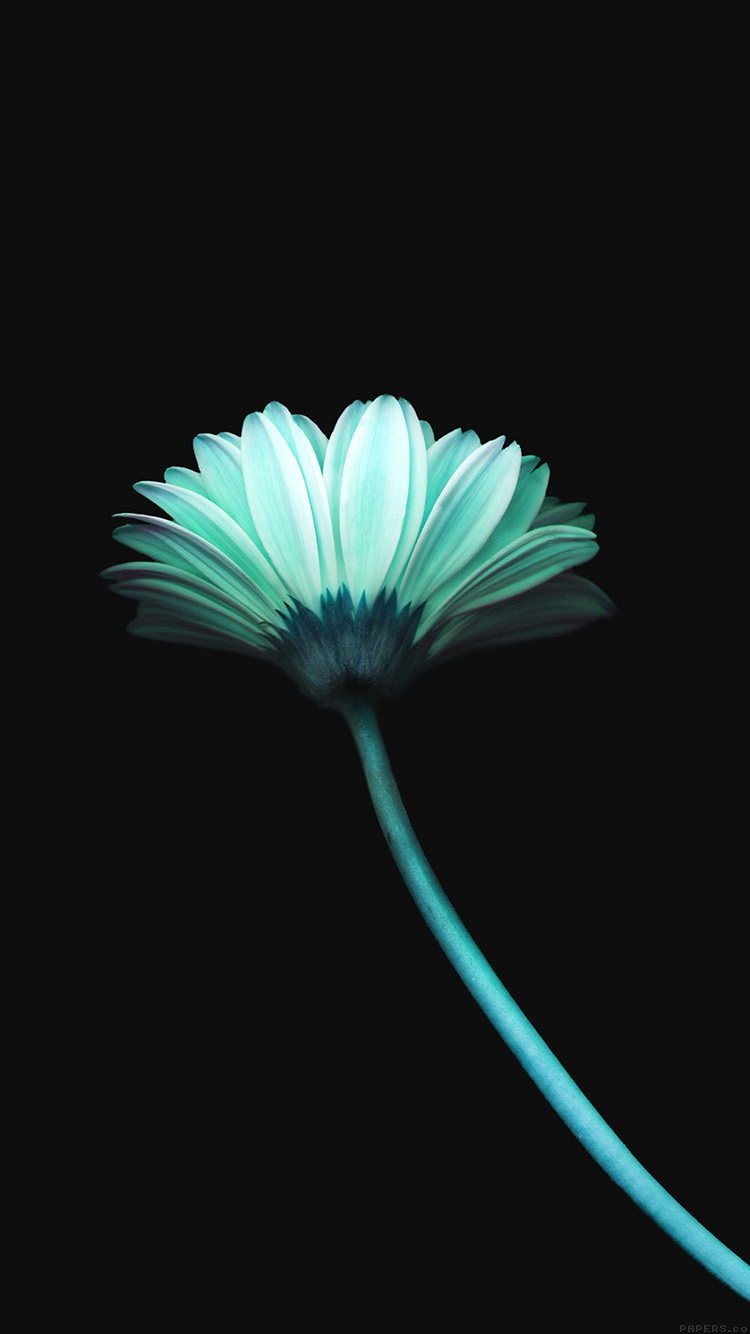 iPhone6papers.co-Apple-iPhone-6-iphone6-plus-wallpaper-mk69-lonely-flower-dark-blue-simple-minimal-nature