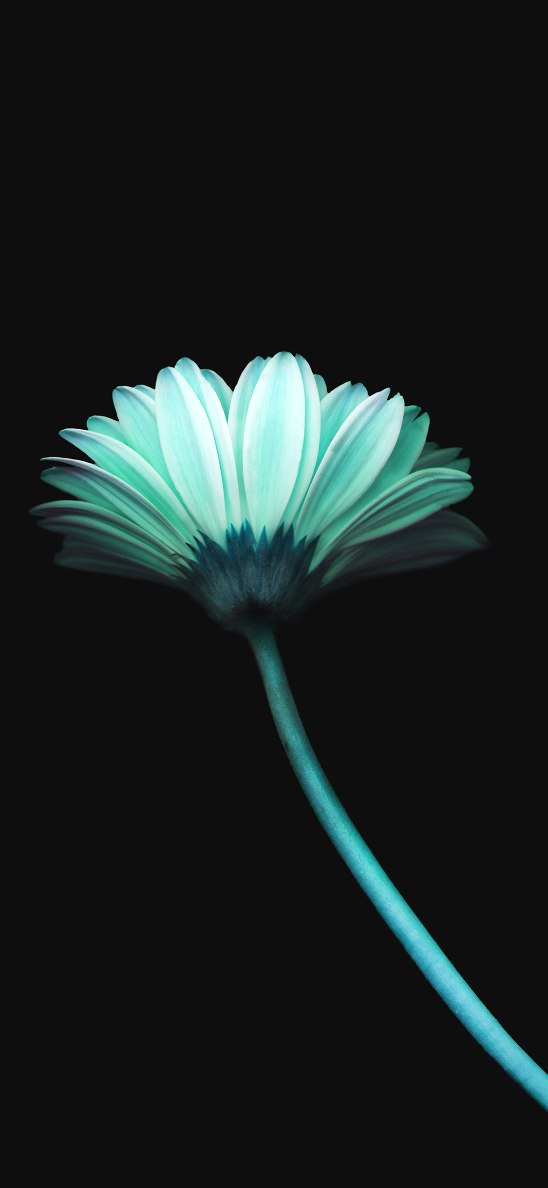 mk69-lonely-flower-dark-blue-simple-minimal-nature - Papers.co