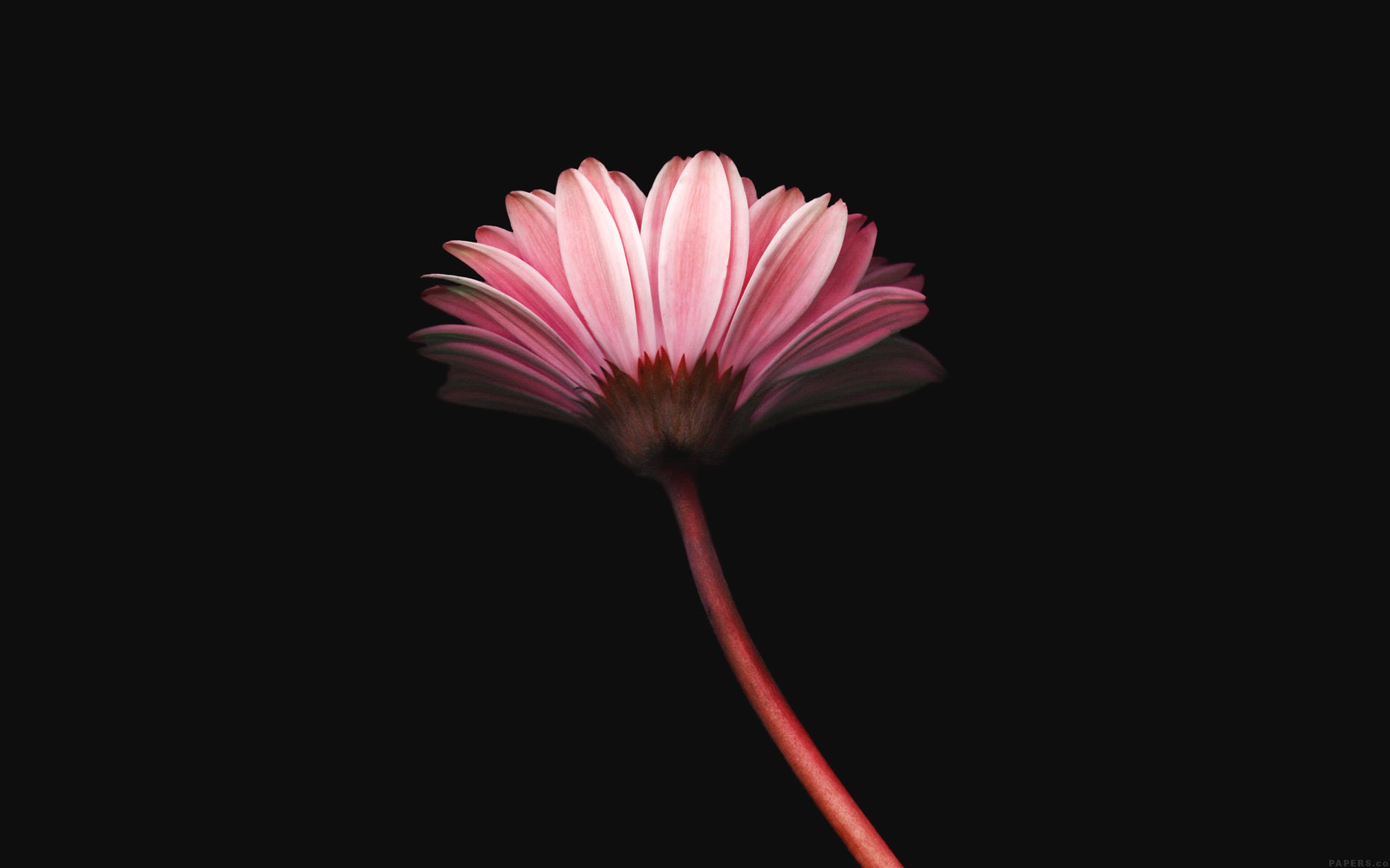 Фото айфон 6 цветок
