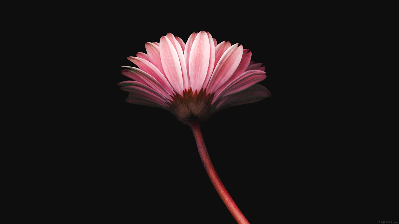 iPapers.co-Apple-iPhone-iPad-Macbook-iMac-wallpaper-mk70-lonely-flower-dark-red-simple-minimal-nature-wallpaper