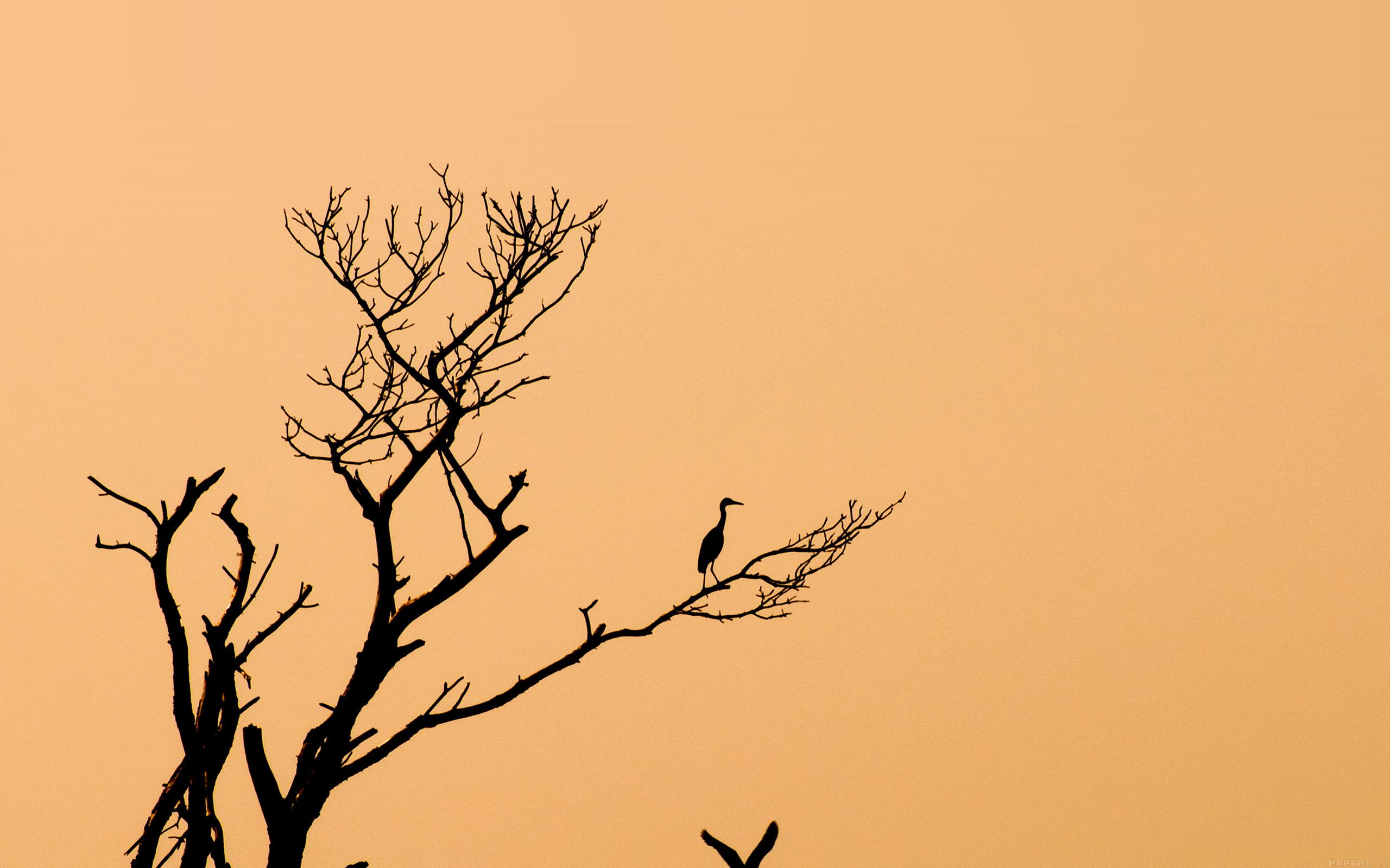 Minimalist Parallax Hd Iphone Ipad Wallpaper: Mk96-bird-sunset-tree-nature-minimal