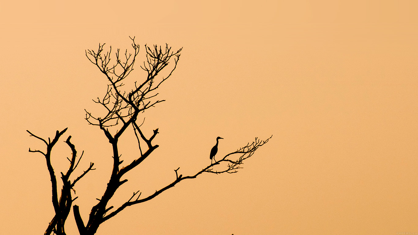 iPapers.co-Apple-iPhone-iPad-Macbook-iMac-wallpaper-mk96-bird-sunset-tree-nature-minimal-wallpaper