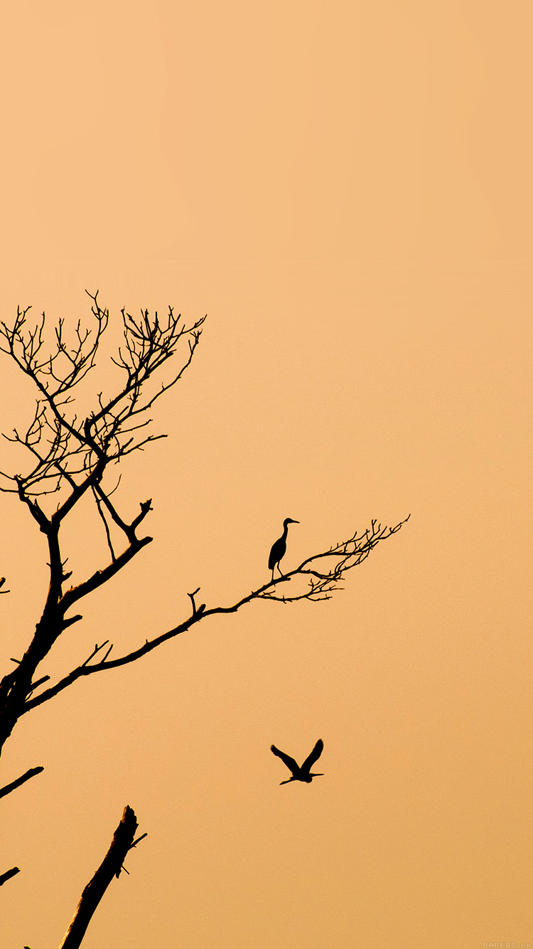 iPhone6papers.co-Apple-iPhone-6-iphone6-plus-wallpaper-mk96-bird-sunset-tree-nature-minimal