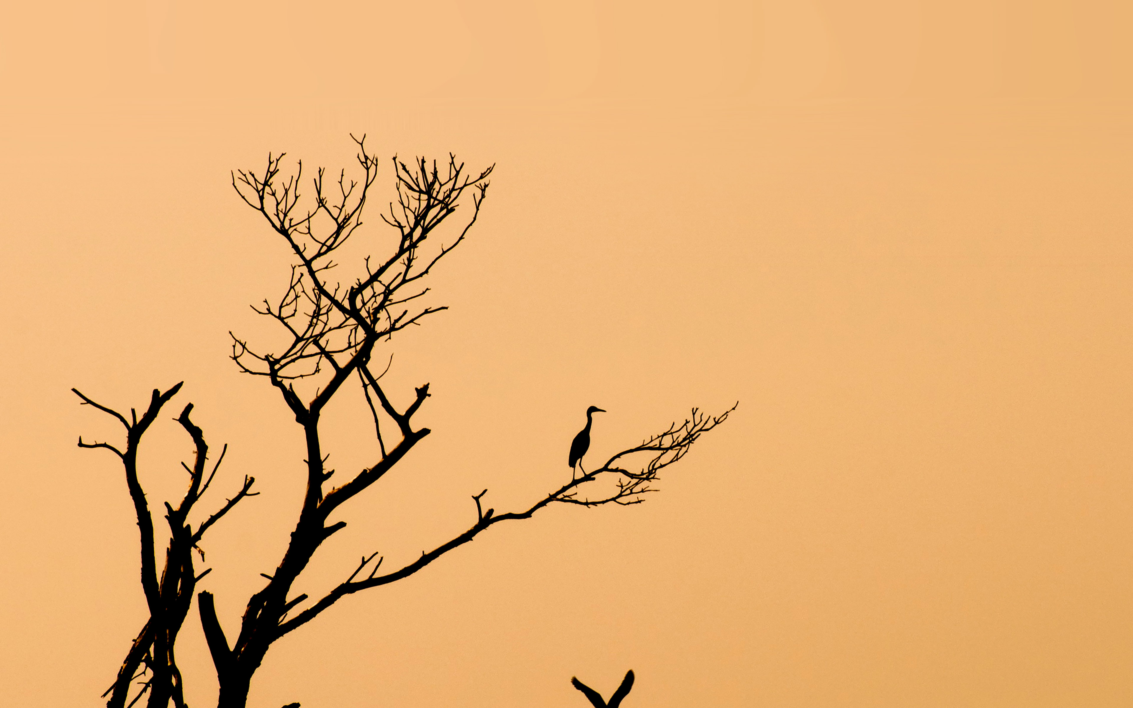 Mk96 Bird Sunset Tree Nature Minimal