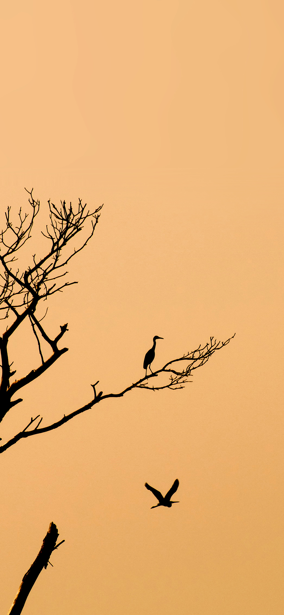 iPhoneXpapers.com-Apple-iPhone-wallpaper-mk96-bird-sunset-tree-nature-minimal