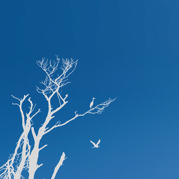iPapers.co-Apple-iPhone-iPad-Macbook-iMac-wallpaper-mk97-bird-sunset-tree-blue-nature-minimal-wallpaper