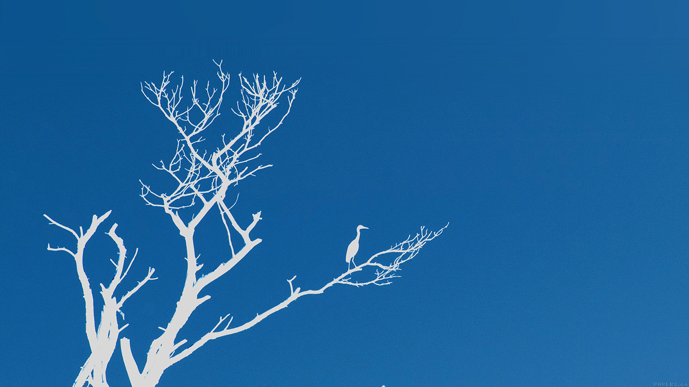 desktop-wallpaper-laptop-mac-macbook-air-mk97-bird-sunset-tree-blue-nature-minimal-wallpaper