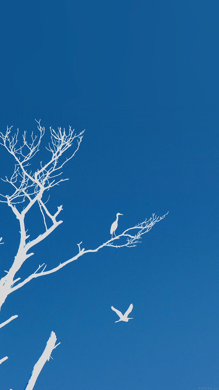 Papers.co-iPhone5-iphone6-plus-wallpaper-mk97-bird-sunset-tree-blue-nature-minimal