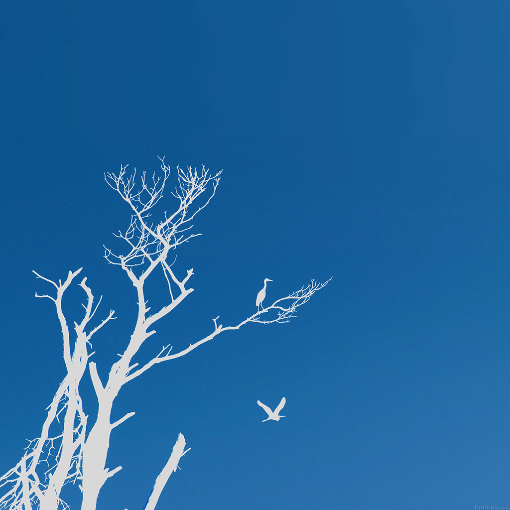wallpaper-mk97-bird-sunset-tree-blue-nature-minimal-wallpaper