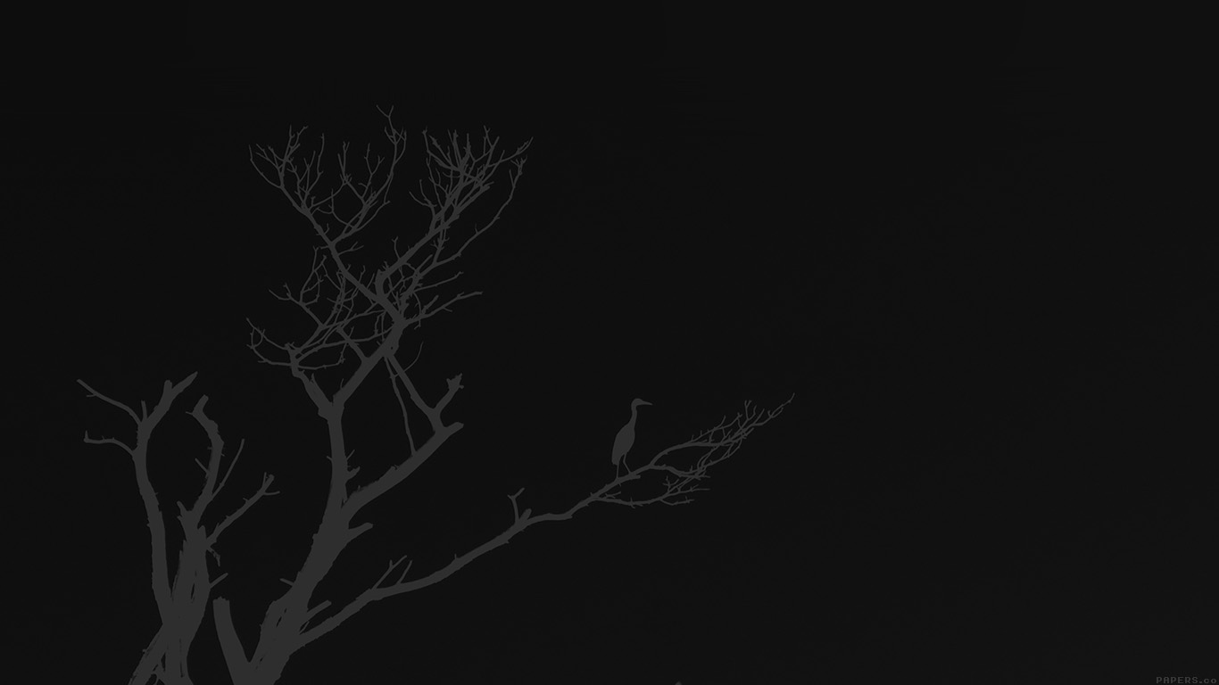 desktop-wallpaper-laptop-mac-macbook-airmk98-bird-sunset-tree-dark-nature-minimal-wallpaper