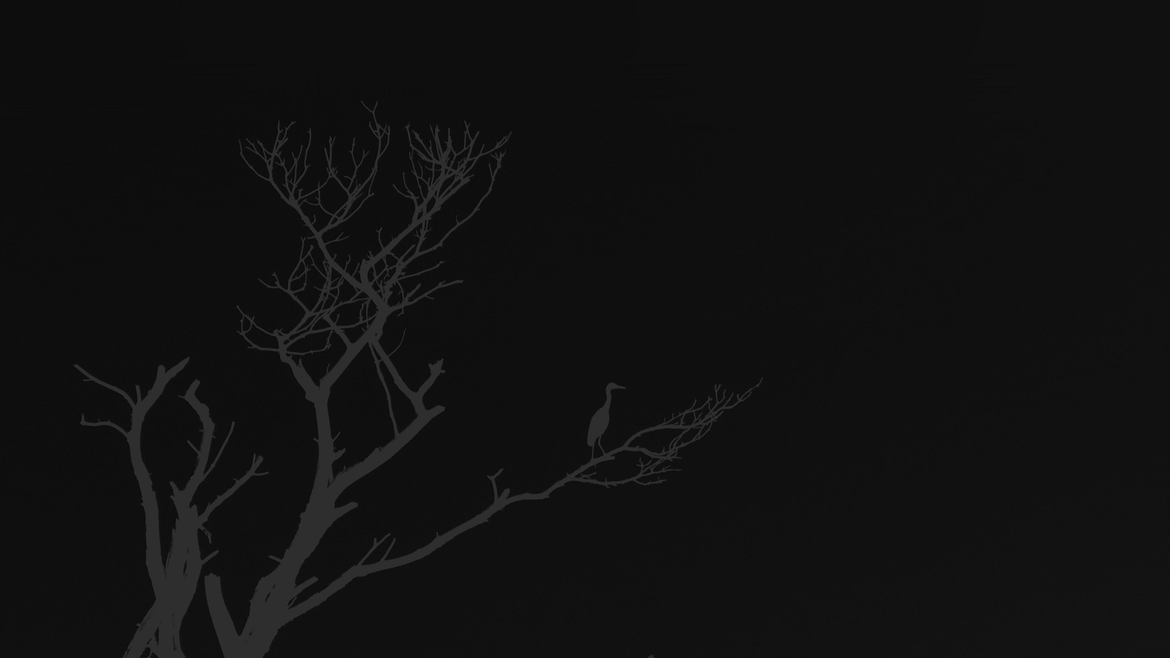 wallpaper for desktop, laptop   mk98-bird-sunset-tree-dark ...