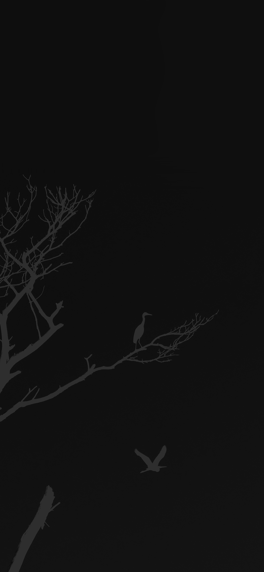 iPhoneXpapers.com-Apple-iPhone-wallpaper-mk98-bird-sunset-tree-dark-nature-minimal