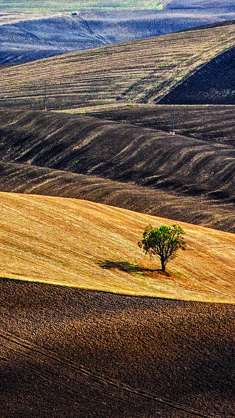 iPhone6papers.co-Apple-iPhone-6-iphone6-plus-wallpaper-ml24-desert-farm-nature-tree-lonly
