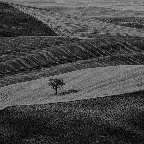 iPapers.co-Apple-iPhone-iPad-Macbook-iMac-wallpaper-ml25-desert-farm-dark-nature-tree-lonely-bw-wallpaper