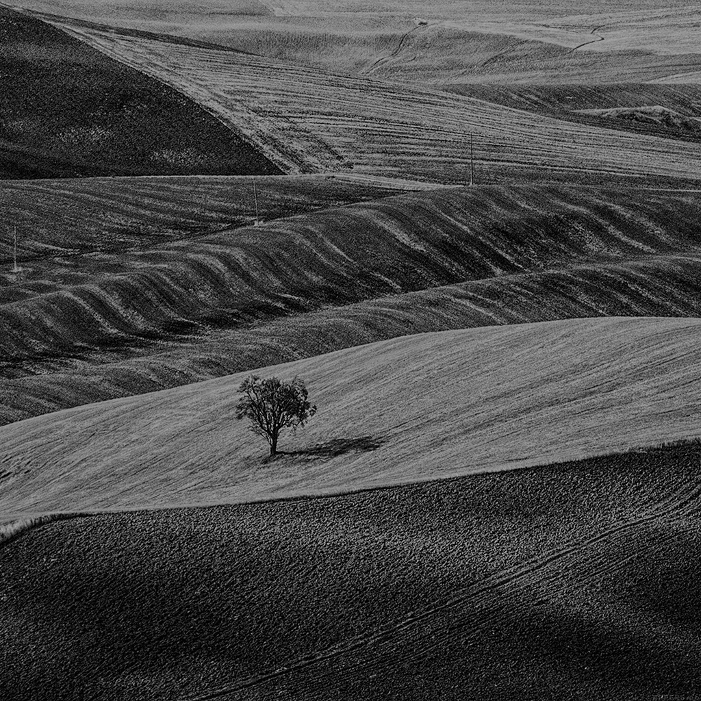 wallpaper-ml25-desert-farm-dark-nature-tree-lonely-bw-wallpaper