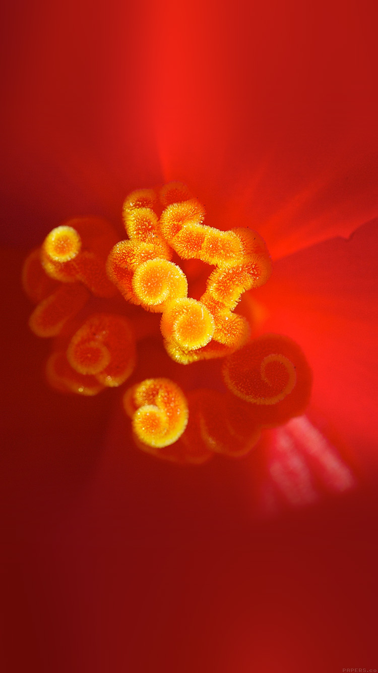 iPhone6papers.co-Apple-iPhone-6-iphone6-plus-wallpaper-ml44-flower-red-zoom-beautiful-nature-spring