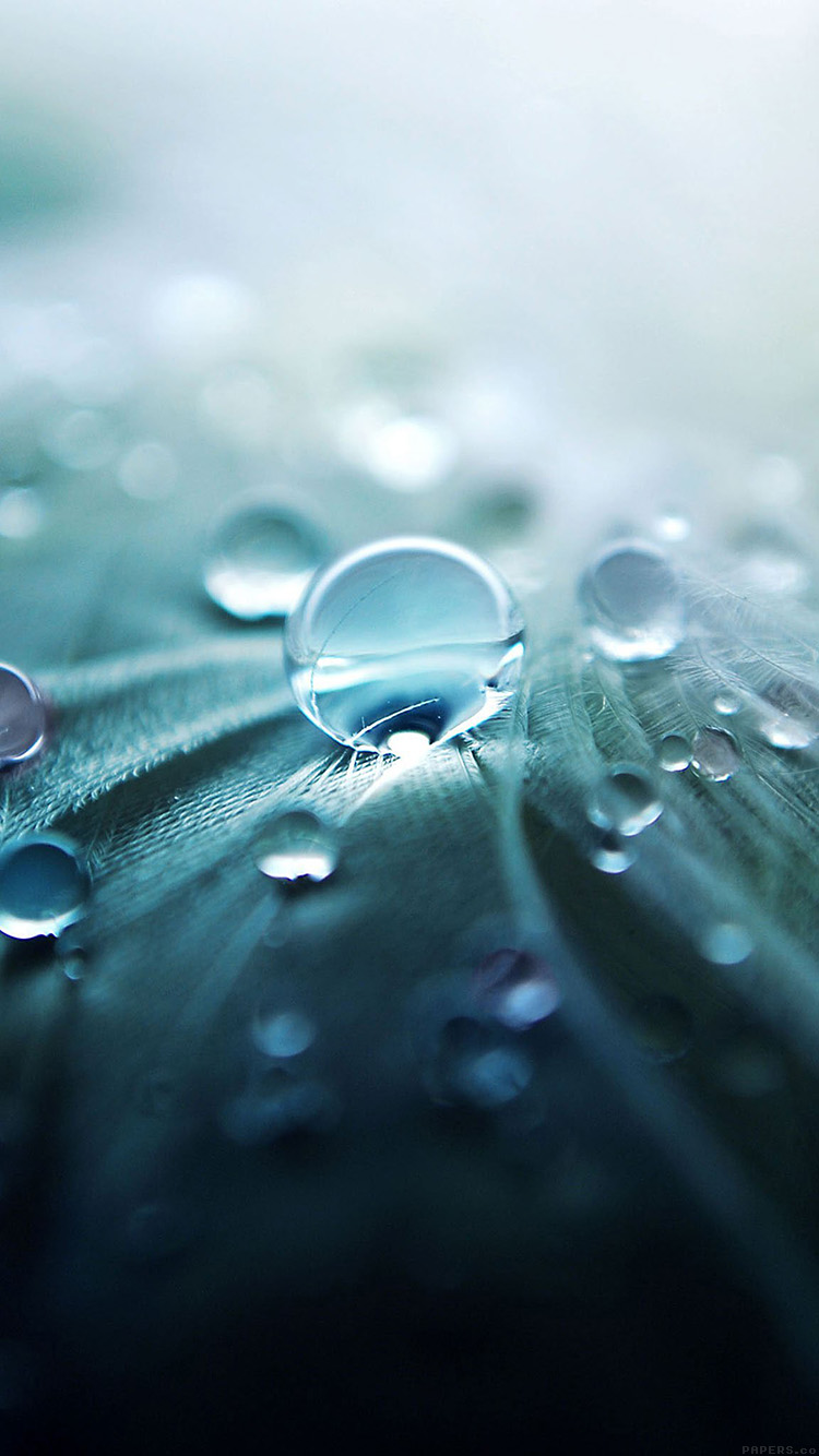 Papers.co-iPhone5-iphone6-plus-wallpaper-ml53-raindrops-nature-leaf-art-green