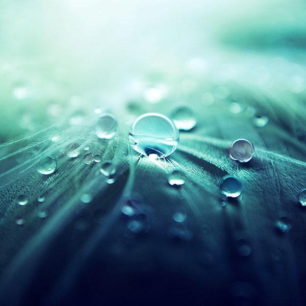 iPapers.co-Apple-iPhone-iPad-Macbook-iMac-wallpaper-ml54-raindrops-nature-leaf-art-green-blue-wallpaper