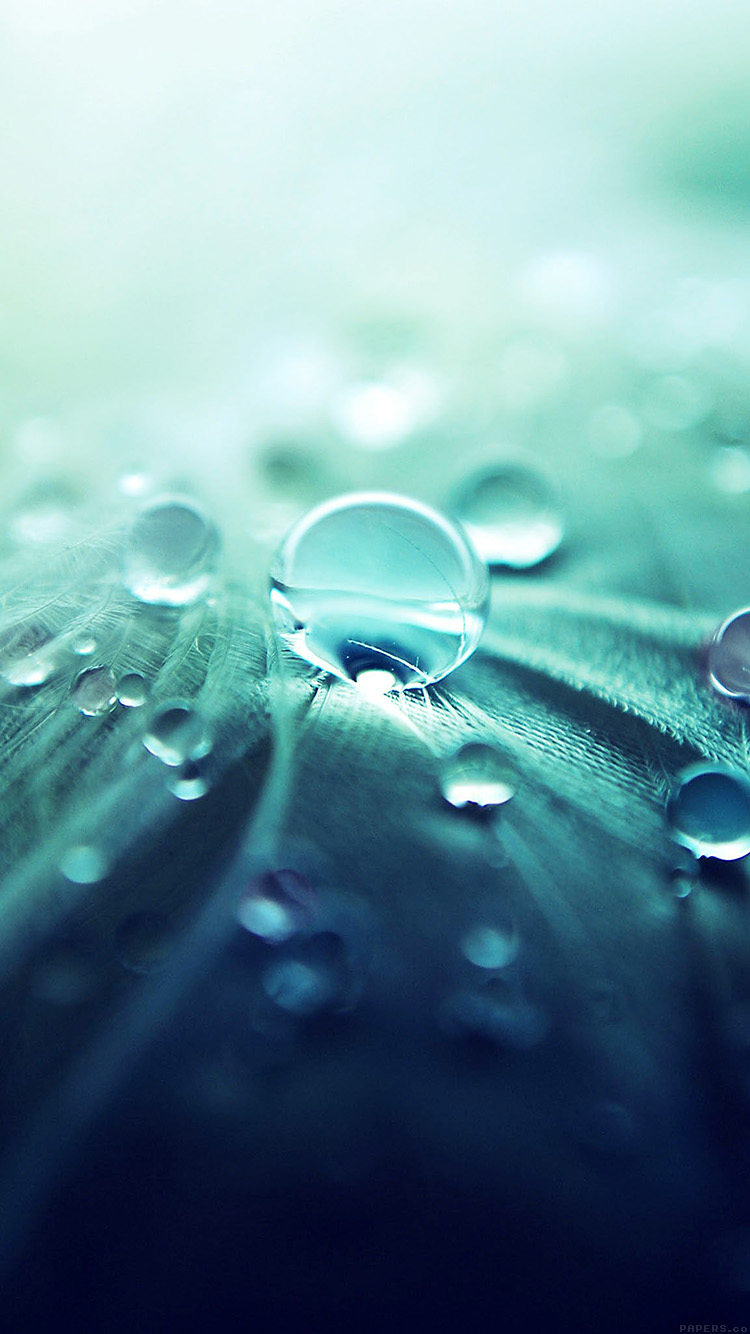 Papers.co-iPhone5-iphone6-plus-wallpaper-ml54-raindrops-nature-leaf-art-green-blue