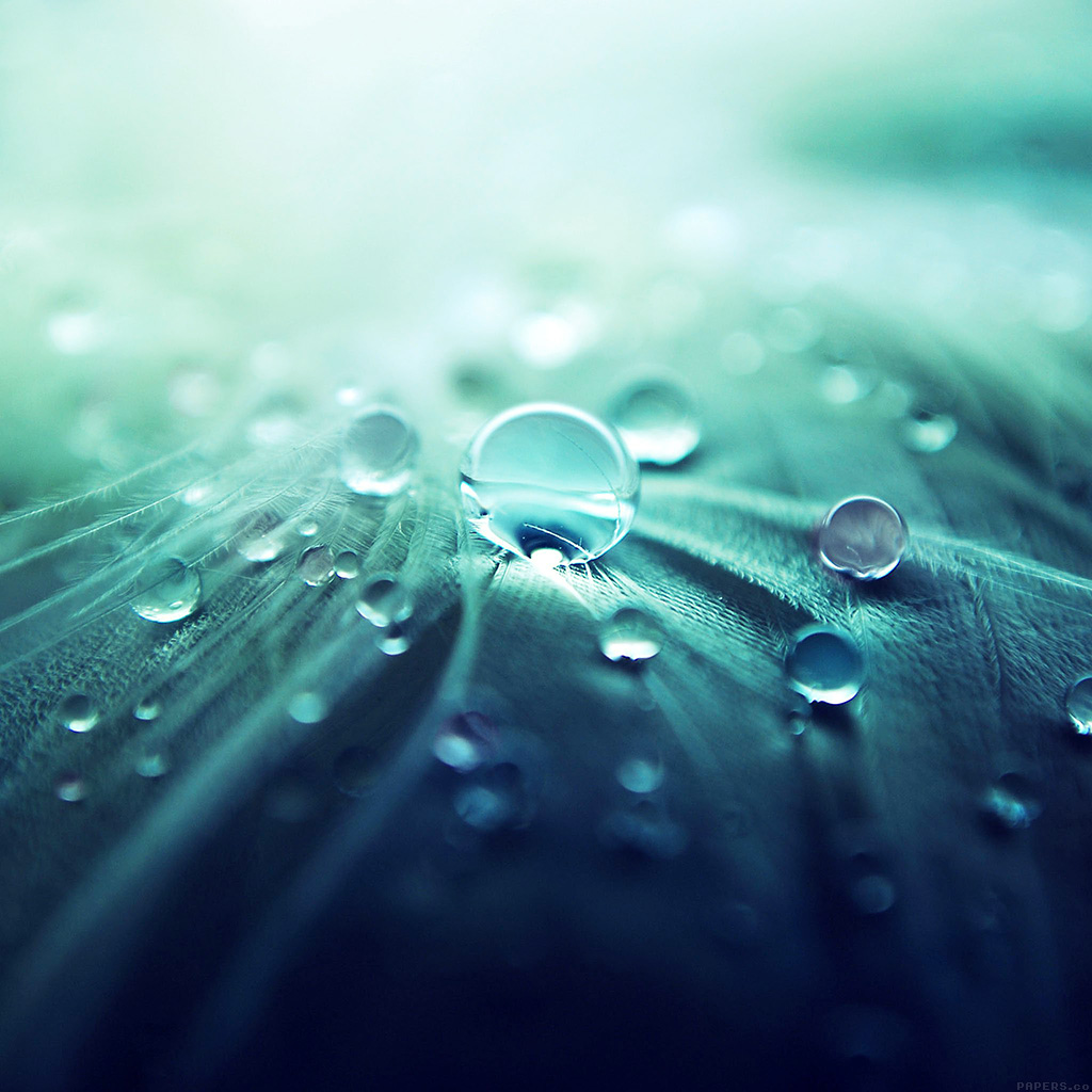 wallpaper-ml54-raindrops-nature-leaf-art-green-blue-wallpaper