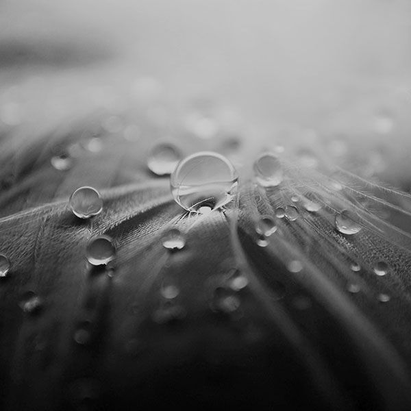 iPapers.co-Apple-iPhone-iPad-Macbook-iMac-wallpaper-ml55-raindrops-nature-leaf-art-bw-dark-wallpaper