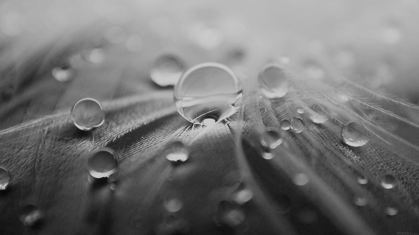 desktop-wallpaper-laptop-mac-macbook-airml55-raindrops-nature-leaf-art-bw-dark-wallpaper