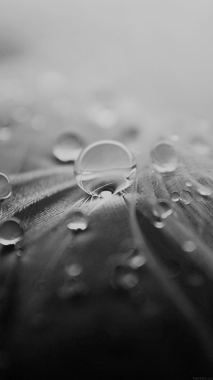 iPhone6papers.co-Apple-iPhone-6-iphone6-plus-wallpaper-ml55-raindrops-nature-leaf-art-bw-dark