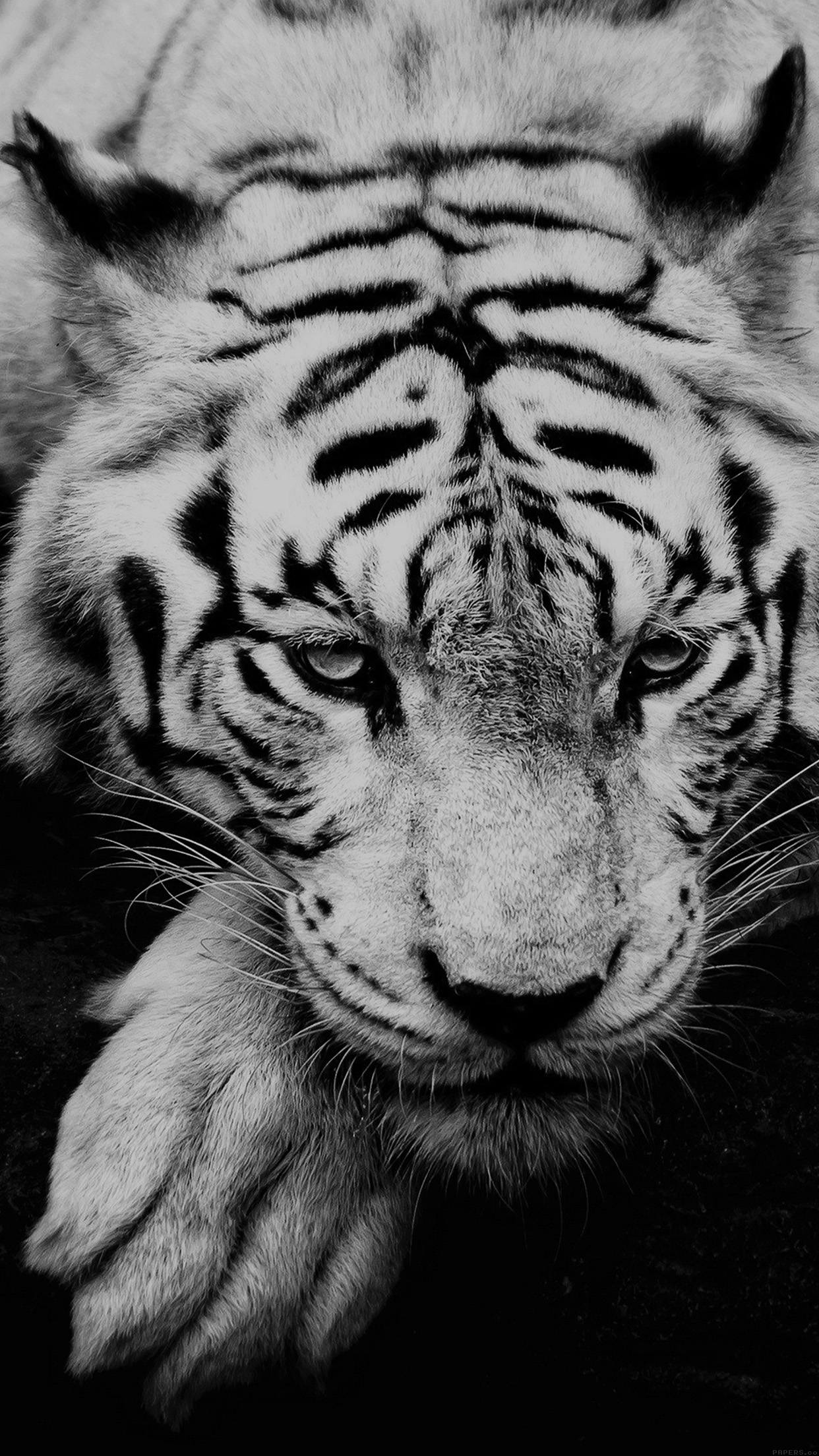 Iphone6papers Ml57 Bw Dark Tiger Animal