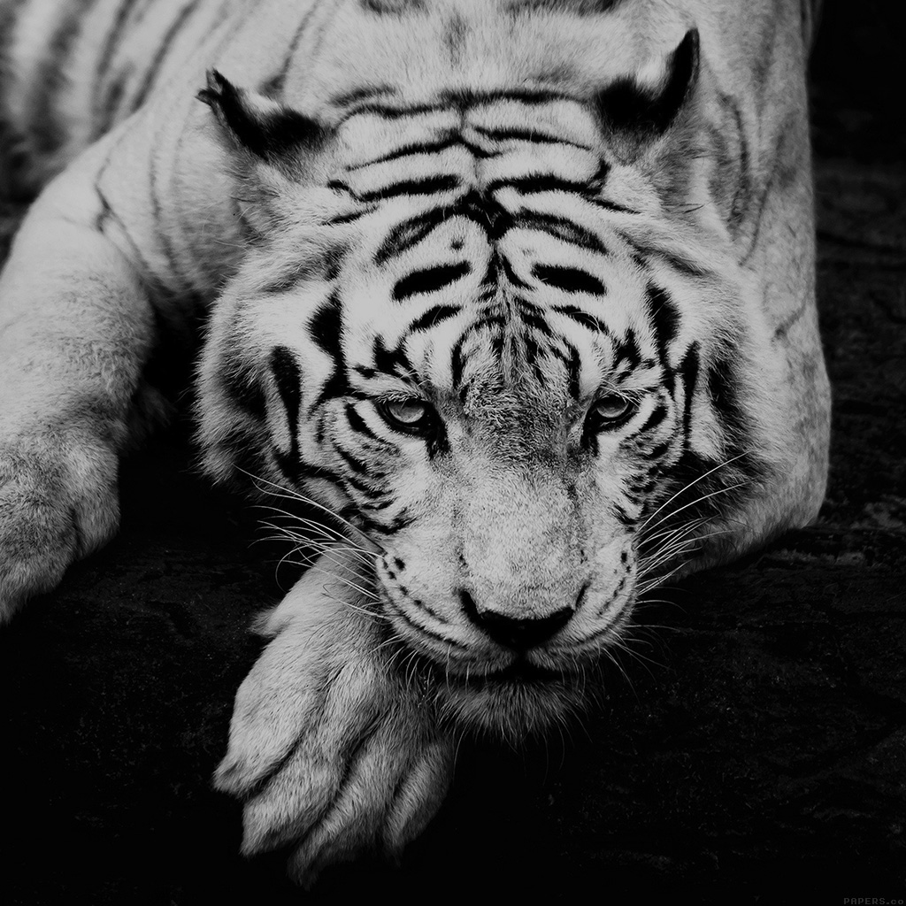 android-wallpaper-ml57-bw-dark-tiger-animal-wallpaper