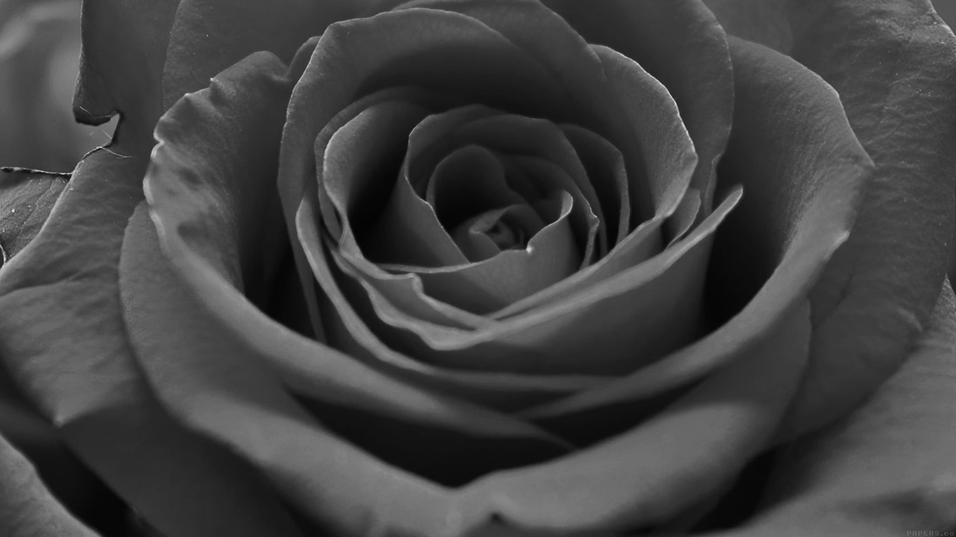 iPapers.co-Apple-iPhone-iPad-Macbook-iMac-wallpaper-ml60-rose-flower-dark-bw-nature-wallpaper