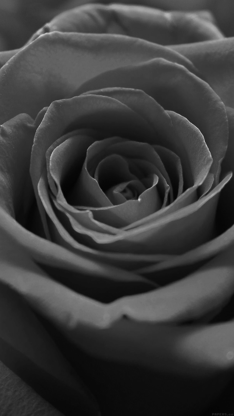 iPhonepapers.com-Apple-iPhone8-wallpaper-ml60-rose-flower-dark-bw-nature