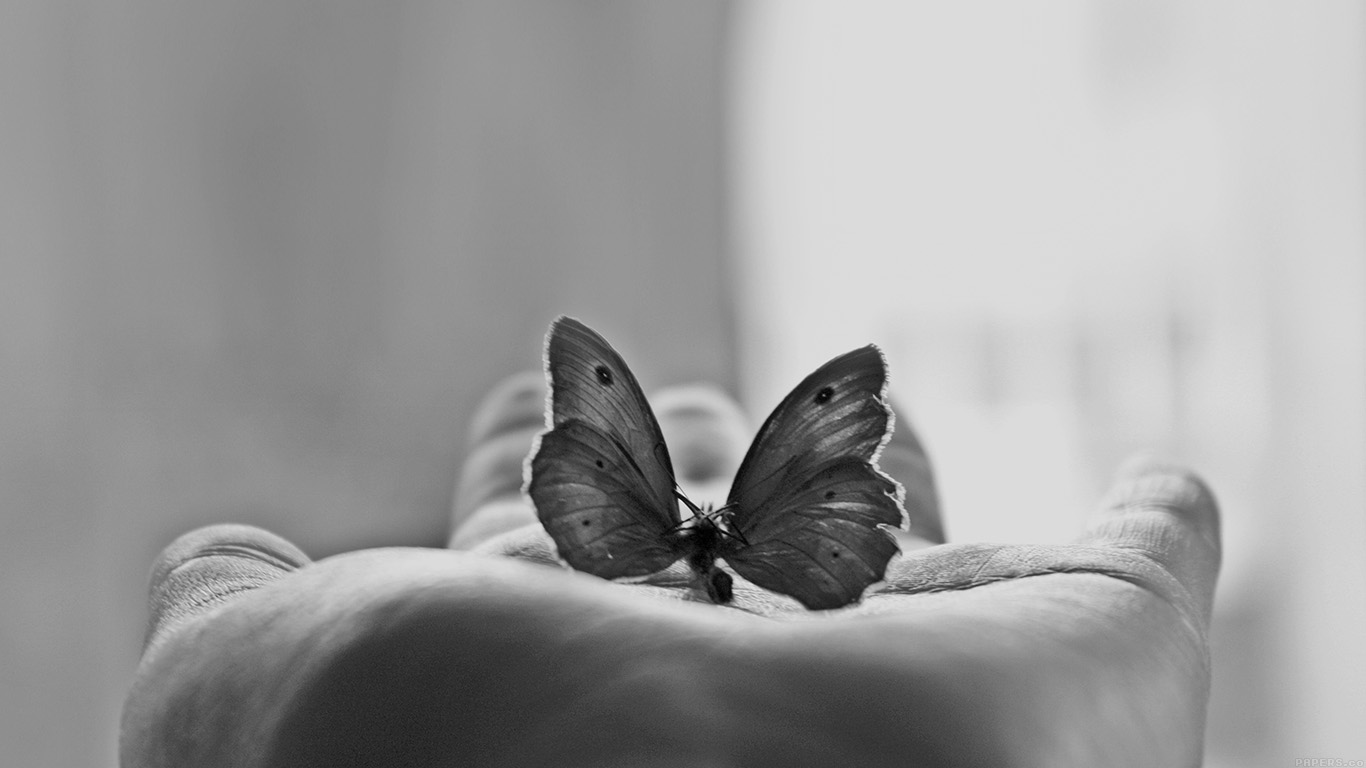 iPapers.co-Apple-iPhone-iPad-Macbook-iMac-wallpaper-ml80-butterfly-love-in-hand-animal-bw-wallpaper