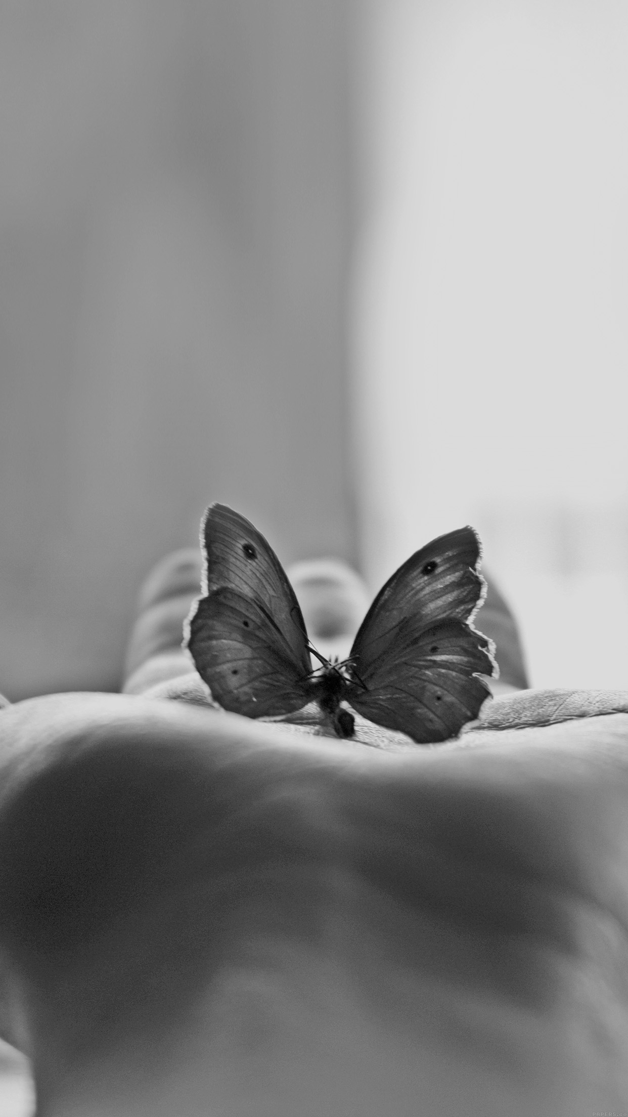 Ml80 Butterfly Love In Hand Animal Bw