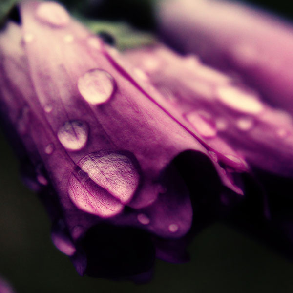 iPapers.co-Apple-iPhone-iPad-Macbook-iMac-wallpaper-ml86-purple-flower-bokeh-rain-nature-wallpaper