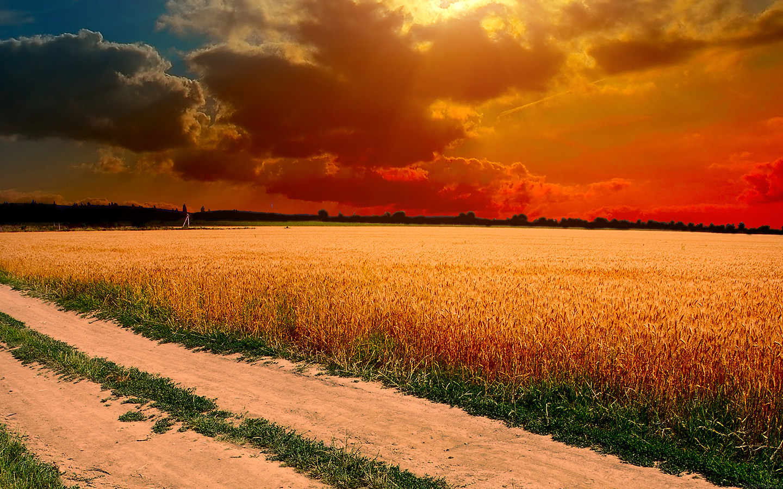 Ml99 Hot Sunny Day Nature Farm Wallpaper
