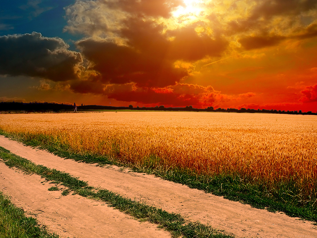 ml99-hot-sunny-day-nature-farm-wallpaper