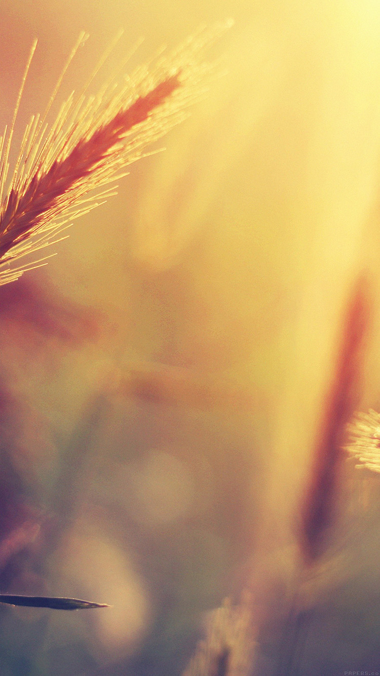 iPhone6papers.co-Apple-iPhone-6-iphone6-plus-wallpaper-mm18-sunset-reed-flower-nature