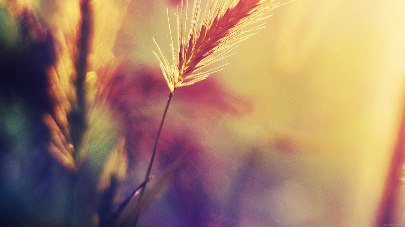 desktop-wallpaper-laptop-mac-macbook-air-mm19-sunset-reed-flower-flare-nature-wallpaper