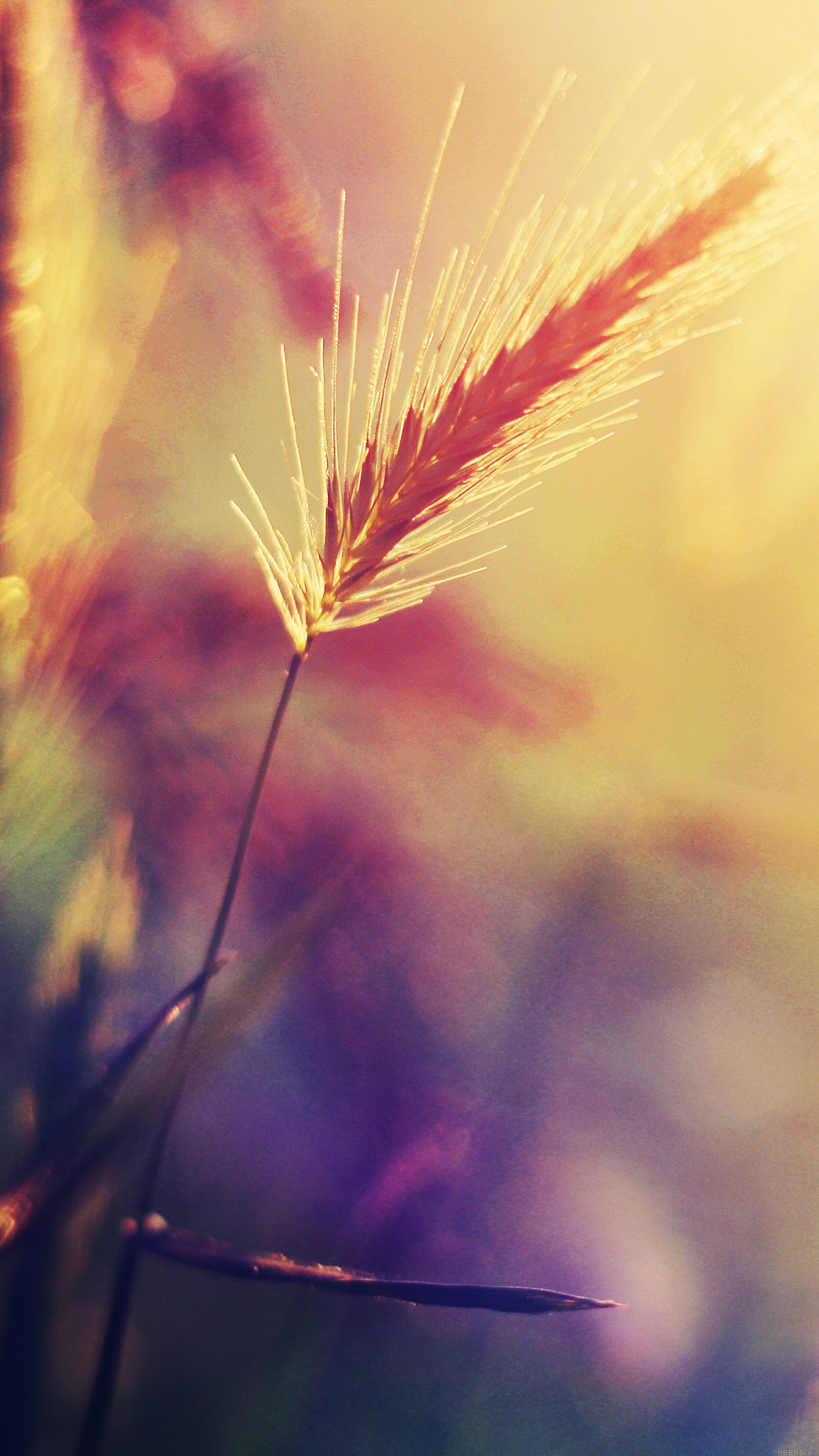 Papers Co Iphone Wallpaper Mm19 Sunset Reed Flower
