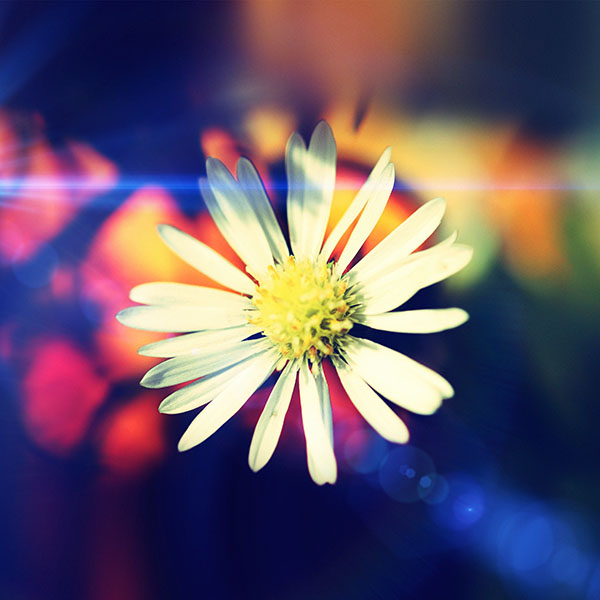 iPapers.co-Apple-iPhone-iPad-Macbook-iMac-wallpaper-mm35-white-flower-nature-flare-wallpaper