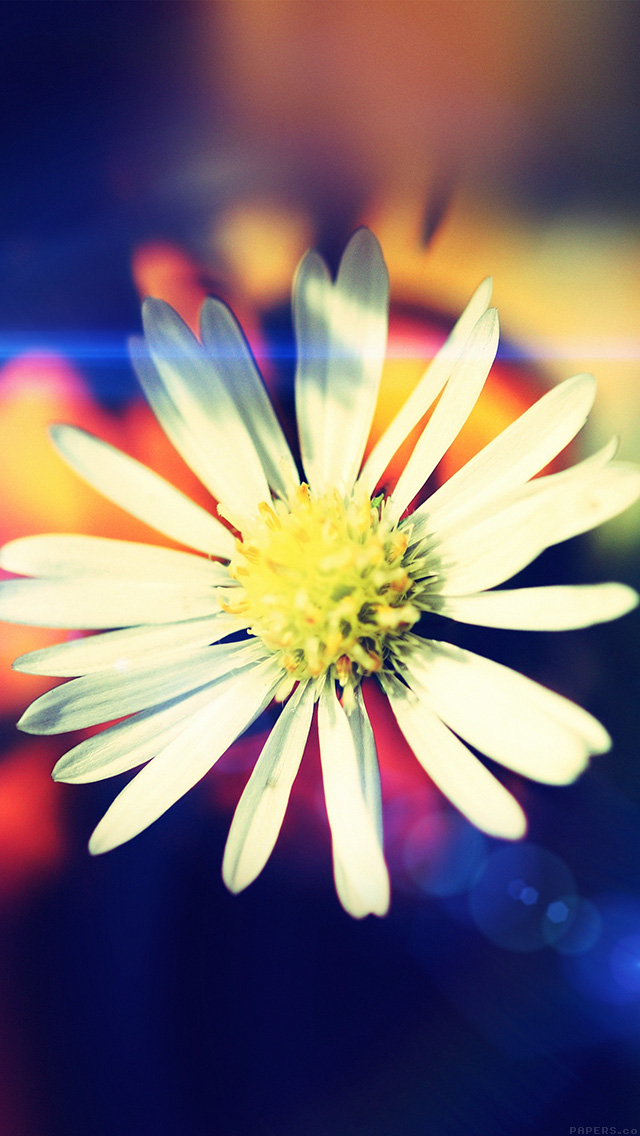 freeios8.com-iphone-4-5-6-plus-ipad-ios8-mm35-white-flower-nature-flare