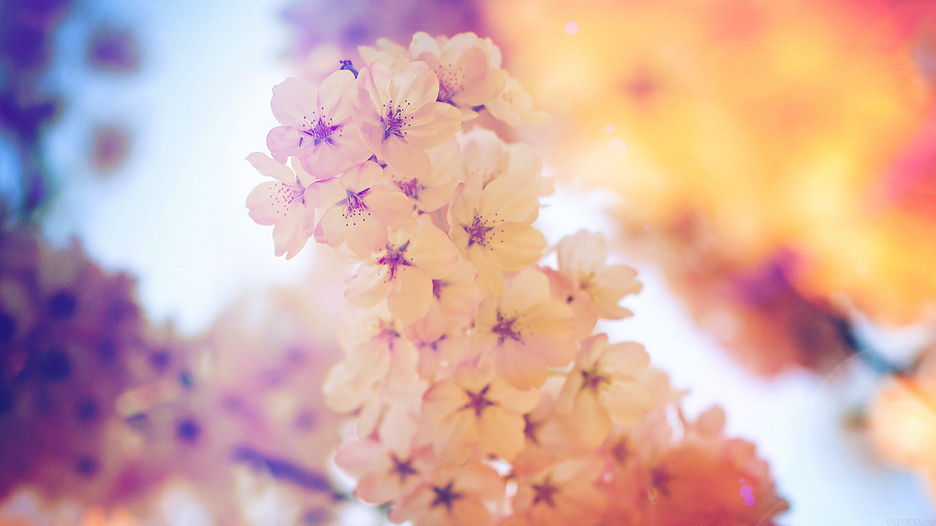 desktop-wallpaper-laptop-mac-macbook-airmm39-flower-blossom-cherry-blue-flare-tree-nature-wallpaper