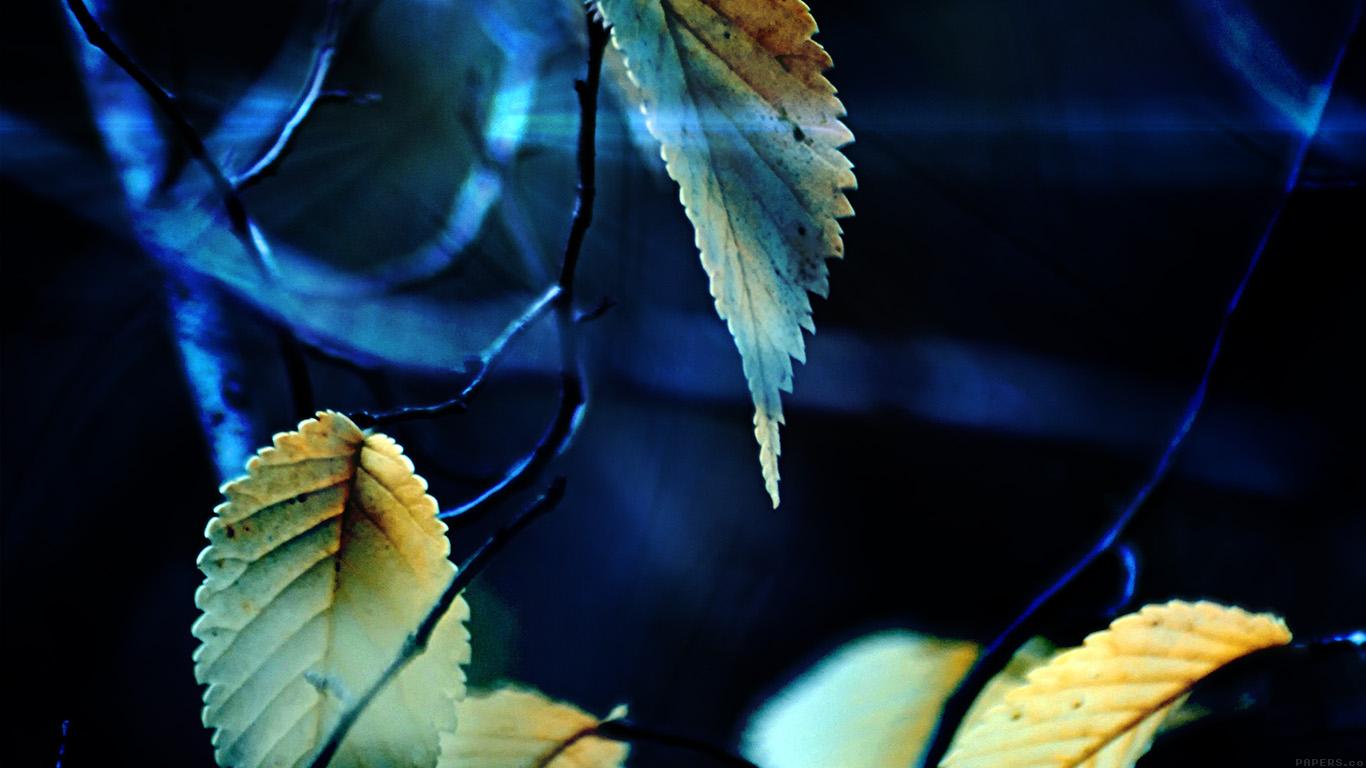 iPapers.co-Apple-iPhone-iPad-Macbook-iMac-wallpaper-mm40-fall-tree-flower-leaf-sorrow-wallpaper